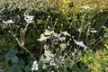 Blumen im Privatgarten - fiori nel giardino privato